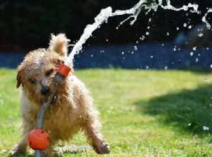 How to keep your dog cool - Best Dog Cooling Vest