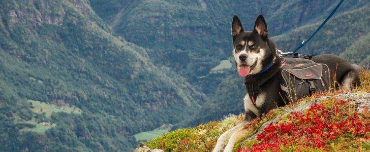 What are the best dog harnesses for hiking?