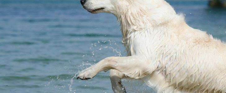 Stay Cool! How to Cool Down your Dog (and keep them cool) this Summer - Swim