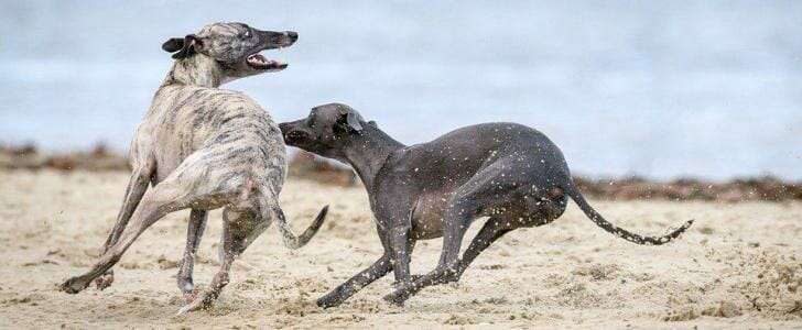 Best Dog Harness for Greyhounds - Our Top 5