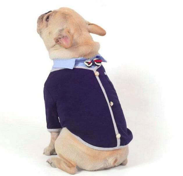 The Preppy Frenchie Cotton Shirt