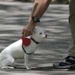 10 Best Dog Leads that Stop Pulling