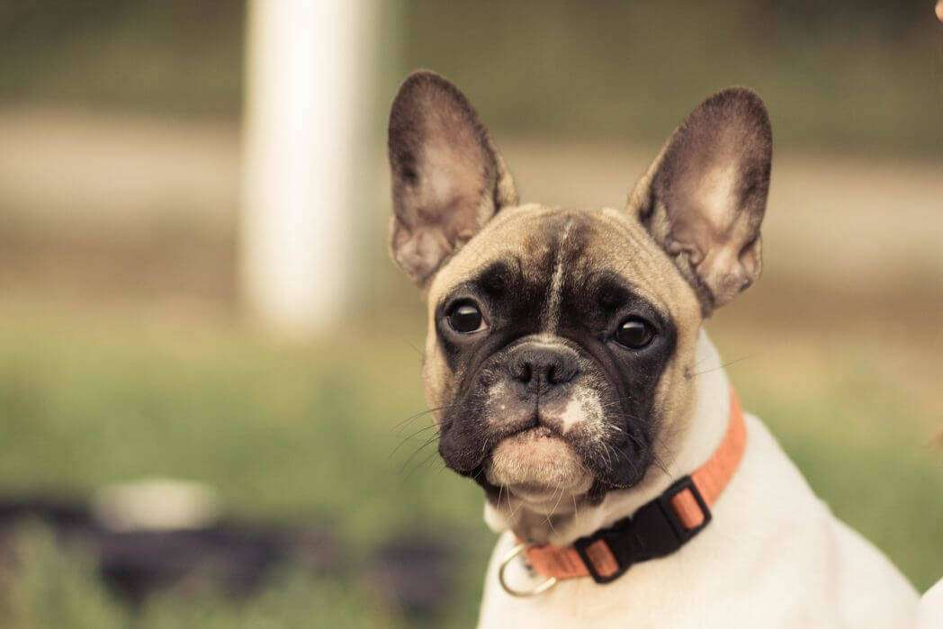 Prevent Dog Throat Injury from Collar Use - A Guide
