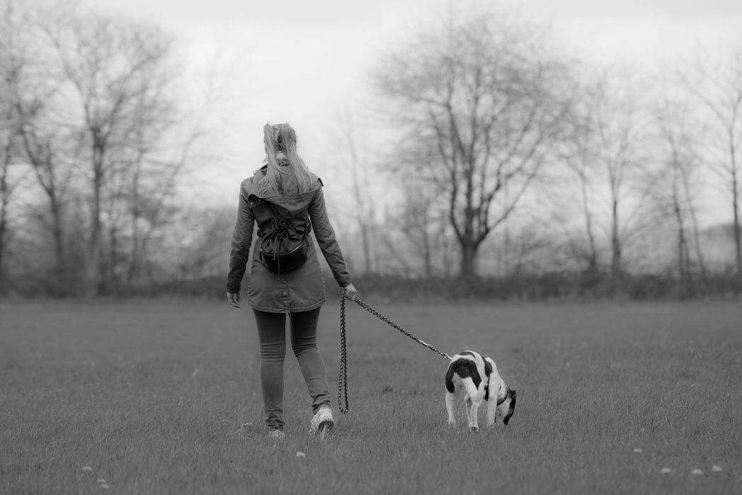 Getting the Best Lead for Your Dog