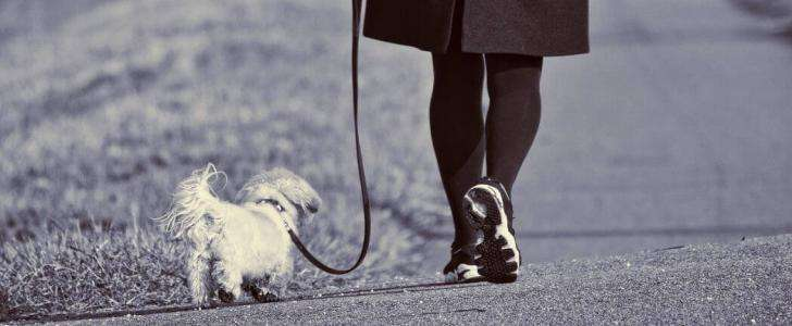 Dog Leads - What's Best for Your Dog? - Woman walking dog on lead