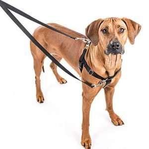 Freedom No-Pull Dog Harness