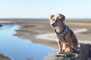 Best Dog Harness Collection 2019