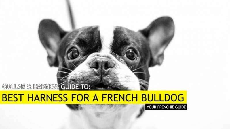 Best Harness for a French Bulldog - Our Top 6