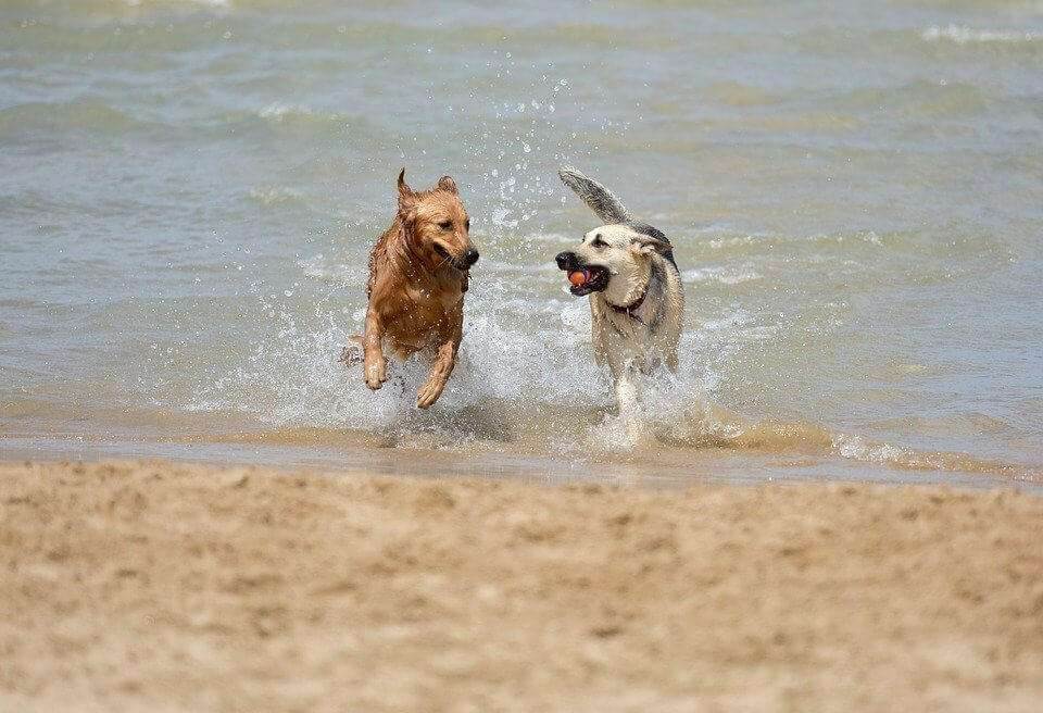 Best Dog Friendly Beaches in the UK - Tried and Tested