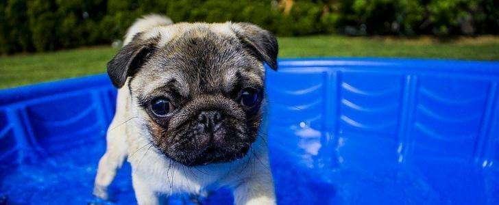 Our Top 6 Best Dog Cooling Vests