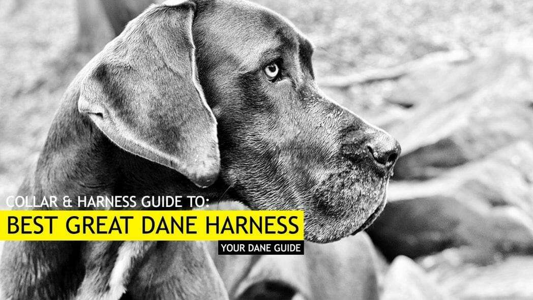 6 Best Great Dane Harnesses - Tried and Tested