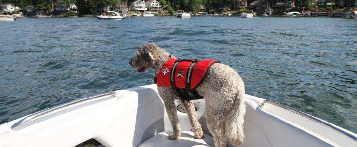 Does my dog need a life vest? A Starter Guide to Dog Life Jackets 2