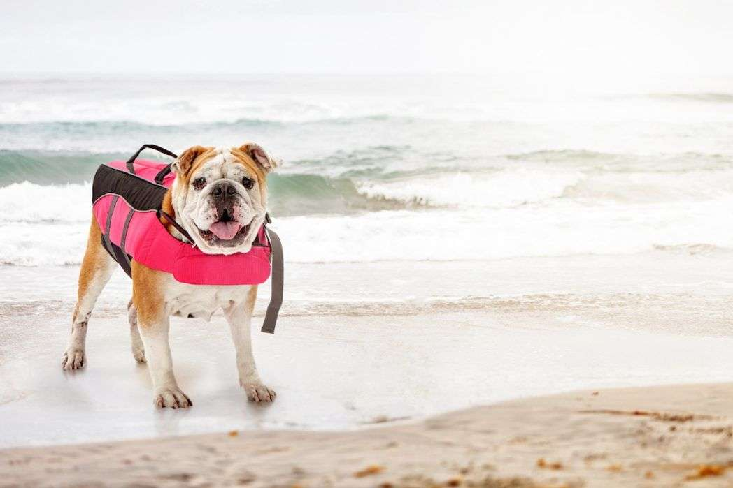 Straightforward Pet Safety Swimming Boating Lifejacket Reflective Strip Jacket Pet Harness Vest Dog Pet Float Life Vest Pet Products
