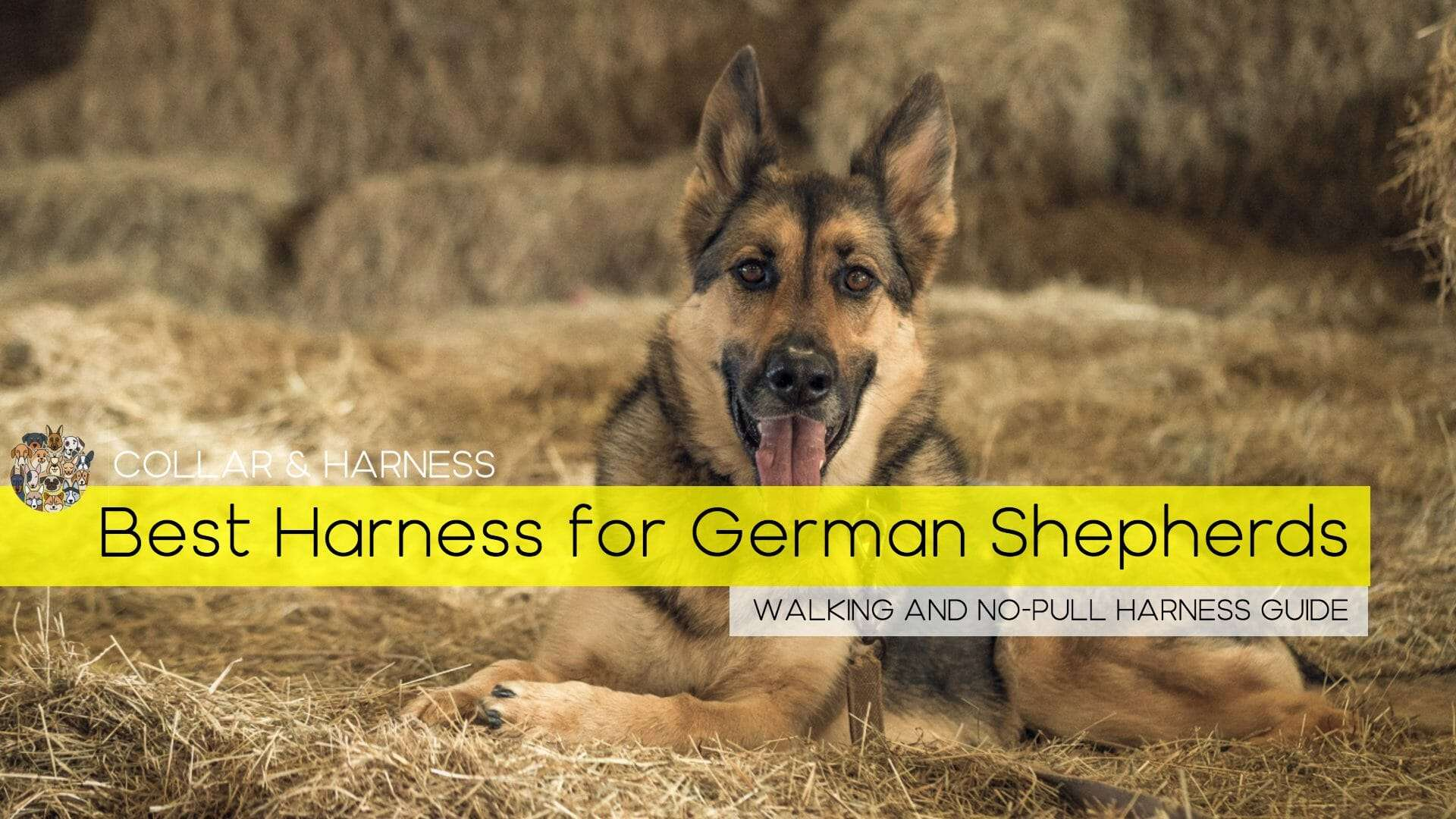 best harness for german shepherd