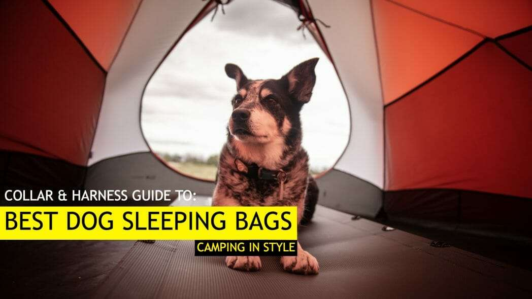 Best Dog Sleeping Bags