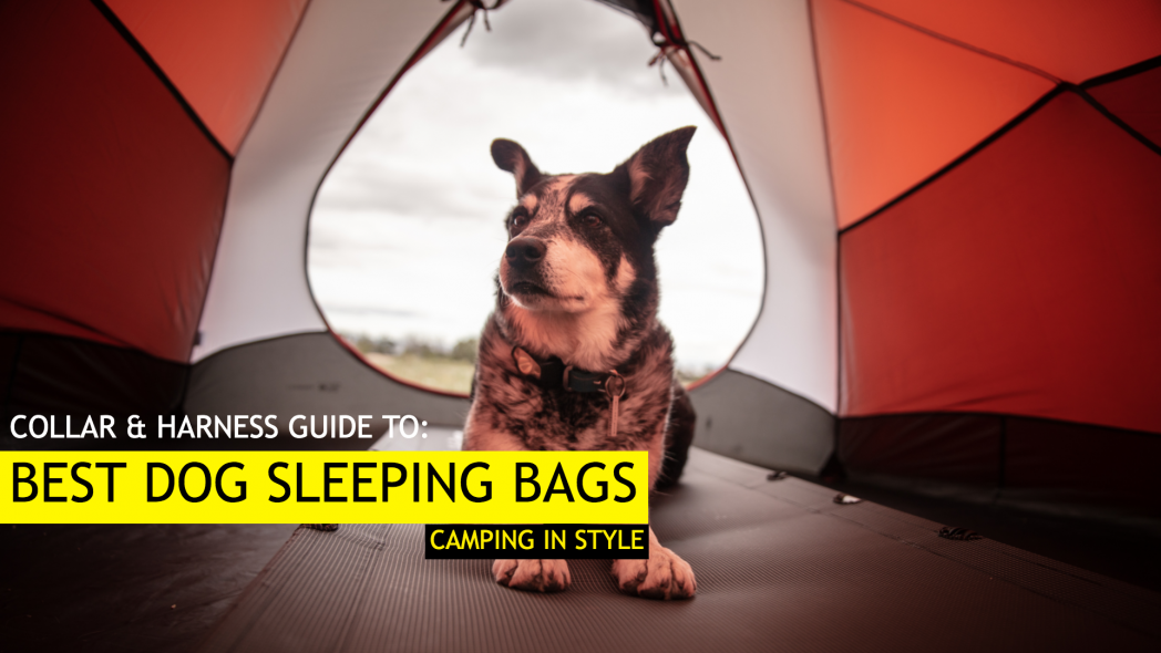 Best Dog Sleeping Bags (Camping with your Dog in 2019)