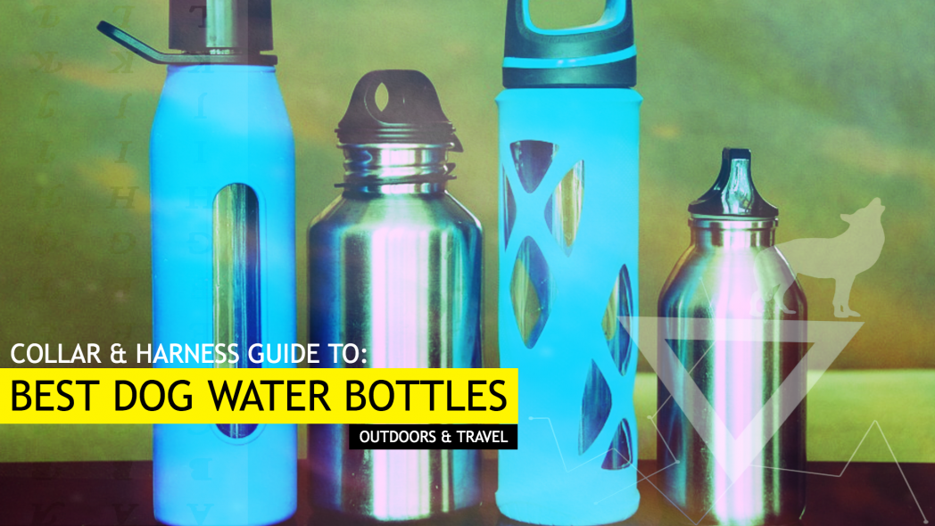 Best Dog Water Bottles (For Outdoors and Travelling - Our Top 7 Picks)