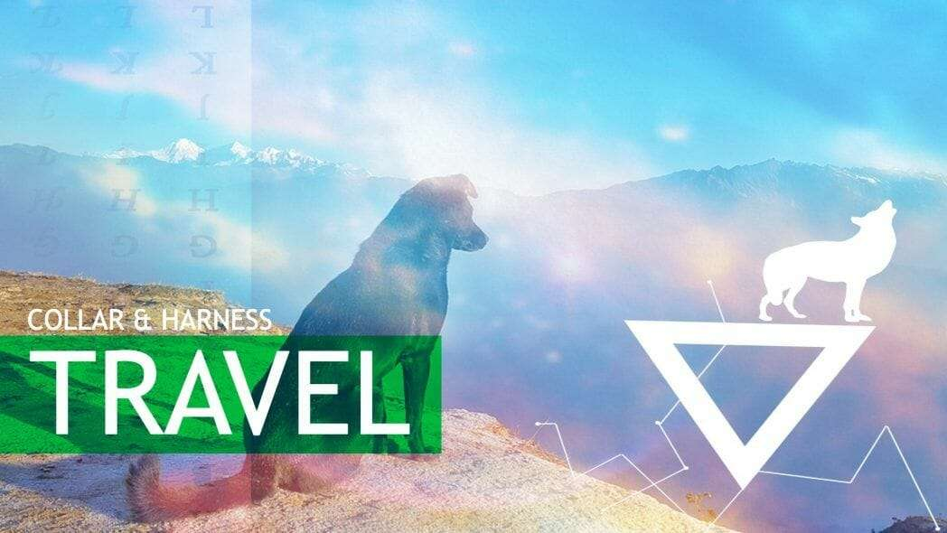 Collar & Harness Dog Travel Section