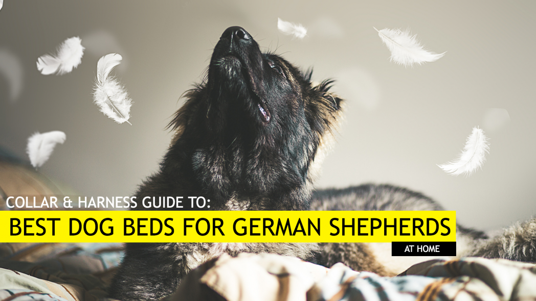 5 Best Dog Beds For German Shepherds Collar And Harness Magazine
