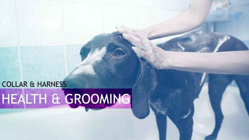Dog Health and Grooming