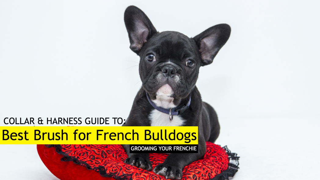 Our 8 Best Brushes for French Bulldogs - How To Groom Your Frenchie