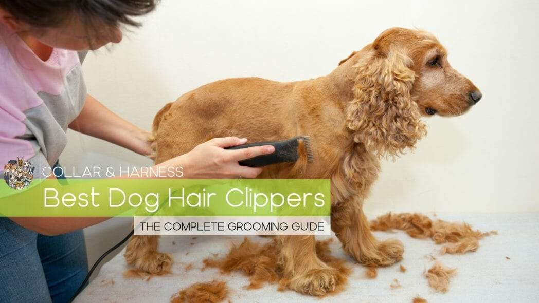 Best Dog Hair Clippers - The Complete Grooming Guide