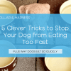 5 Clever Tricks to Stop Your Dog from Eating Too Fast (Bowls, Toys and DIY Ideas)