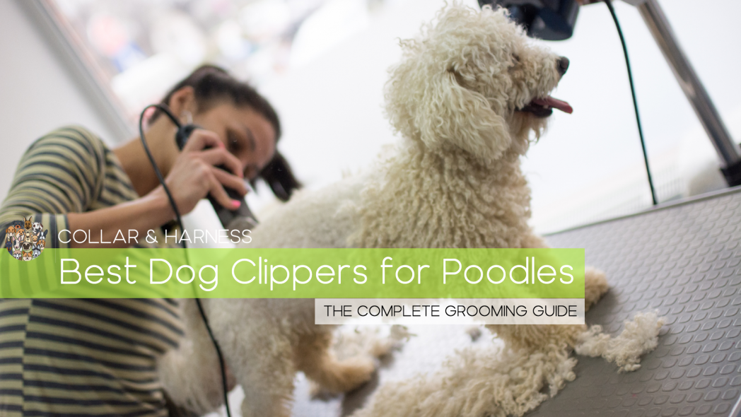 9 Best Dog Clippers for Poodles - Hair Style Pawfection!