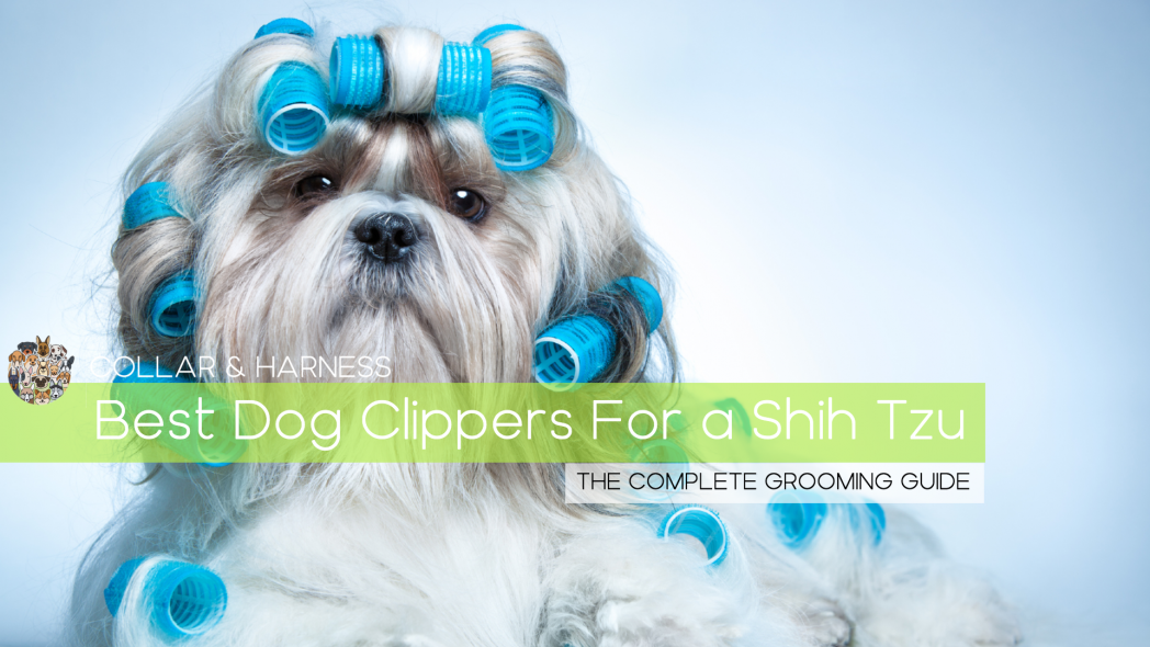 Best Dog Clippers for a Shih Tzu - Doggy Hairdo Like a Pro