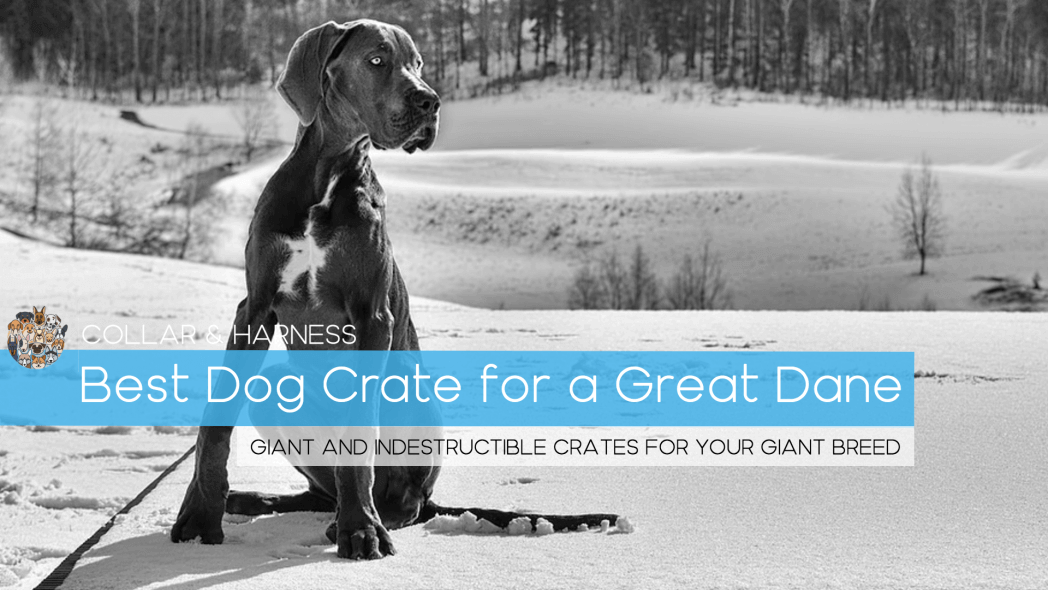 Best Dog Crate for a Great Dane (Plus Our Large Breed Crate Training Guide)
