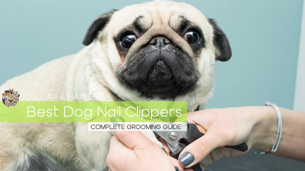 Best Dog Nail Clippers - The Complete Grooming Guide