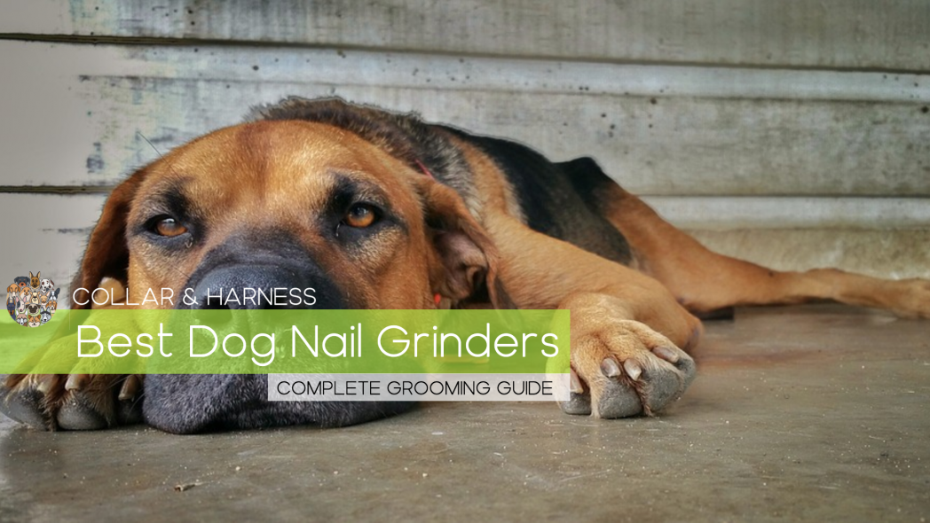 Best Dog Nail Grinder - Our Top 9 - Complete Grooming Guide