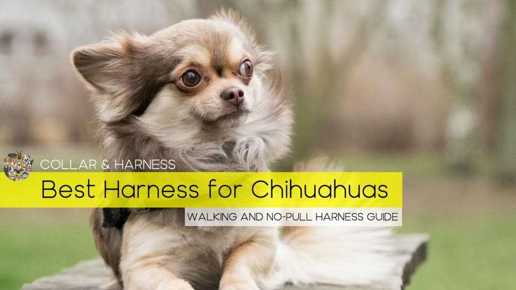 best harness for chihuahuas