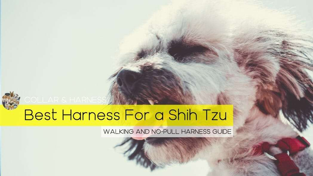 Best Harness for a Shih Tzu
