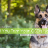 Should You Cut or Shave Your German Shepherd? - Grooming Guide