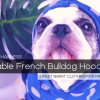Best French Bulldog Hoodies