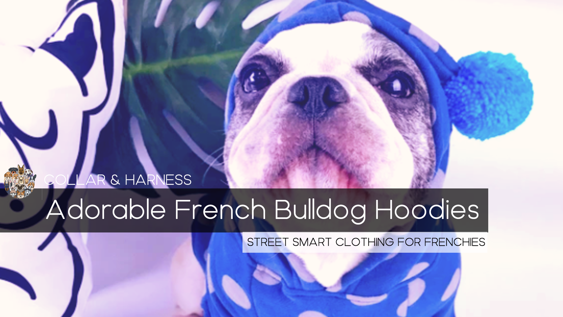 9 Adorable French Bulldog Hoodies - The Best in Style for your Frenchie