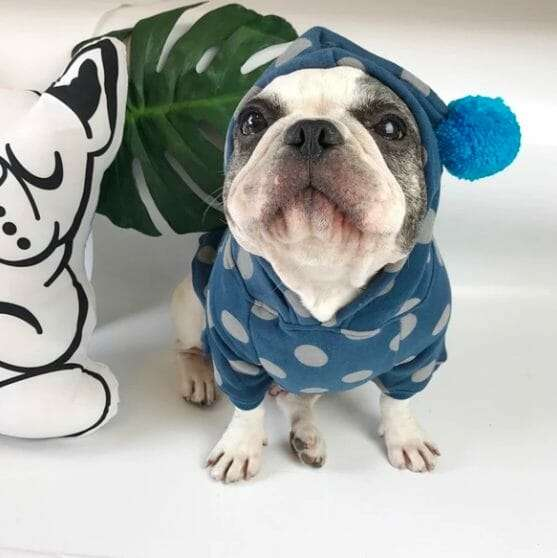 Gray Dot Frenchie Hoodie