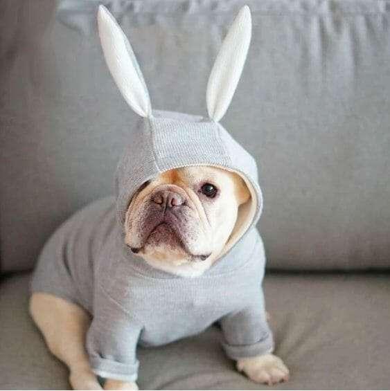 Frenchie Rabbit Hoodie