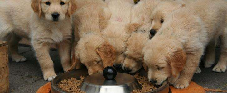 How Can I Stop My Dog From Eating Too Quickly?