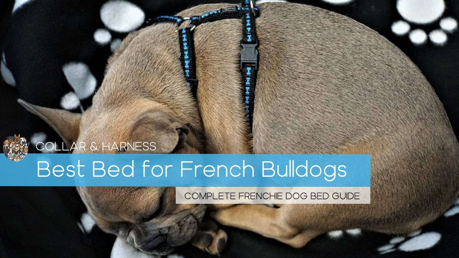 Best Beds For Your French Bulldog - Our Top 6 Dog Beds