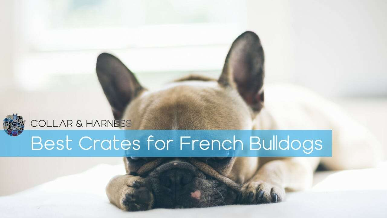 7 Best Dog Crates for French Bulldogs