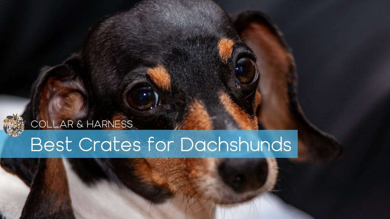 Best Dog Crates for Dachshunds
