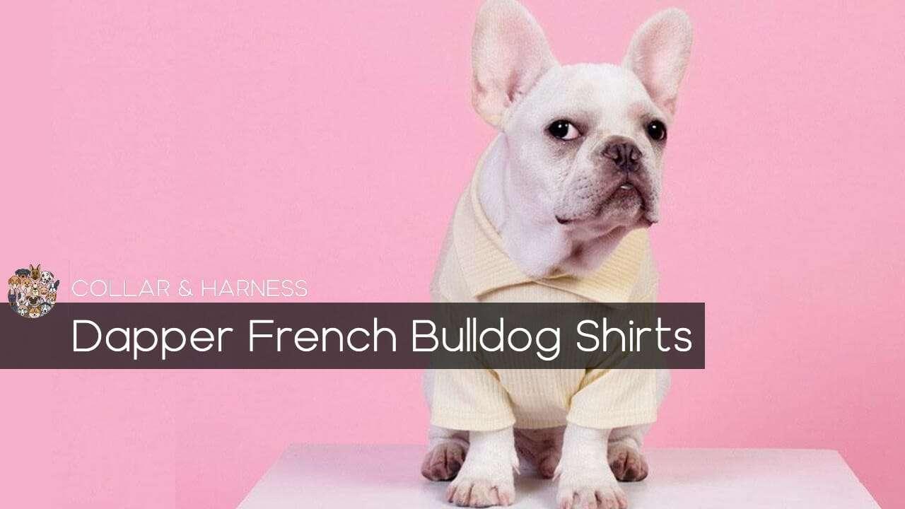 Dapper French Bulldog Shirts