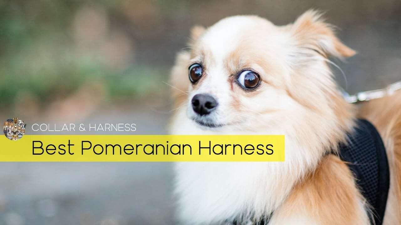 Best Pomeranian Harness