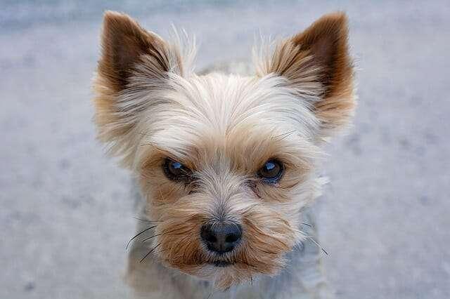 dog, animal, small