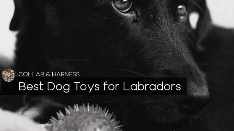 Best Dog Toys for Labs