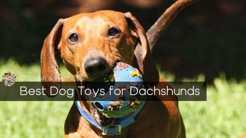 Best Dog Toys For Dachshunds Our Top