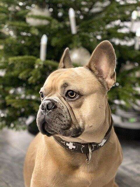 christmas, dog, background