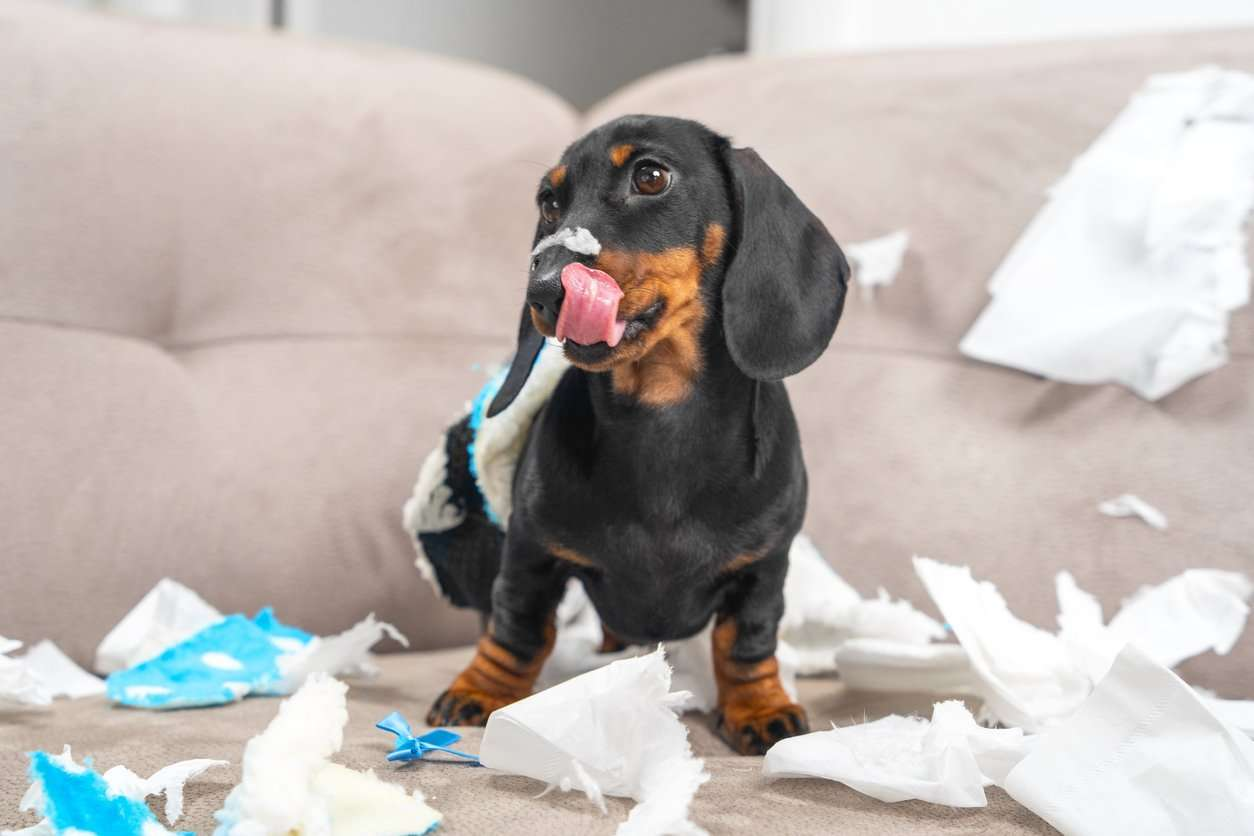 How Do You Stop Your Dog From Destroying Everything?